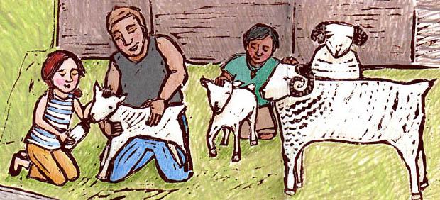 Sheepfarm copy